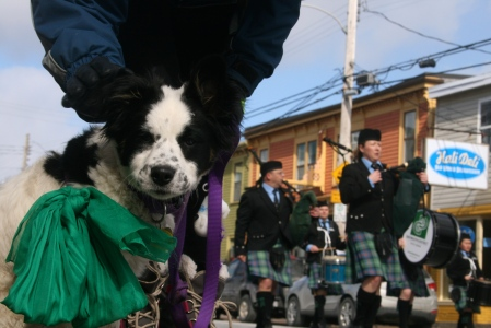 Cute dog averts eyes from the dreaded bagpipes.